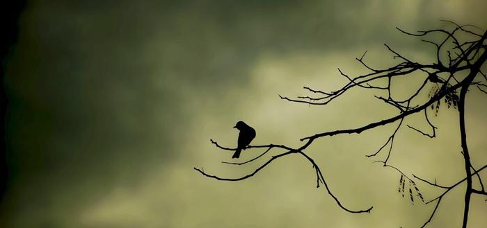 Escapadas, pájaros, isla, misterio, terror, viajes, viajar, destinos, lugares, Lugares y Más